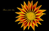 Flower of the Sun by Heroictitof, Photography->Flowers gallery