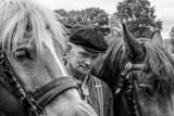 Horses by japio, photography->people gallery