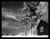 the tale of the lonesome pine by JQ, Photography->Landscape gallery