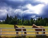 Roam Free by mayne, Photography->Animals gallery