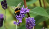 Busy Buzzy by LynEve, photography->flowers gallery