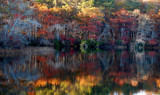 splendor in the leaves by solita17, Photography->Shorelines gallery