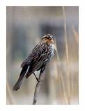Hidden In The Reeds 2 by gerryp, Photography->Birds gallery