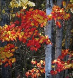 Autumn #6 by picardroe, photography->nature gallery