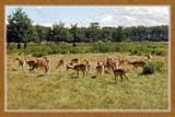 Zeeland 'Wildlife' by corngrowth, Photography->Animals gallery