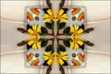 Lazy Daisies by LynEve, photography->manipulation gallery