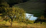 Apple Orchard by mapbc, Photography->Landscape gallery