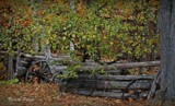 Autumn scene by picardroe, photography->general gallery