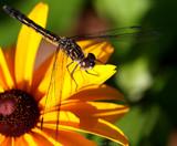 Calendar Garden Capture #2 by tigger3, photography->macro gallery