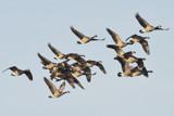 Need Air Traffic Control by garrettparkinson, photography->birds gallery