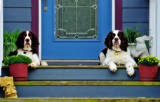 Door Stops by SatCom, photography->pets gallery