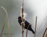 Morning Stillness by garrettparkinson, photography->birds gallery