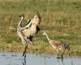 The Dance by garrettparkinson, photography->birds gallery