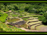 limahuli garden by jeenie11, Photography->Landscape gallery
