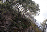 Old Oak by dstwiss, Photography->Landscape gallery