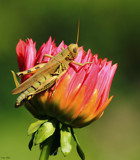 A Dahlia Trial Garden Capture by tigger3, photography->insects/spiders gallery