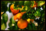 Orange! by JQ, Photography->Food/Drink gallery