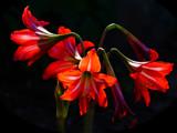 Beauty Light by bfrank, photography->flowers gallery