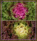 Ornamental Kale by trixxie17, photography->food/drink gallery