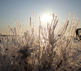 November Icefog by PamParson, Photography->Nature gallery