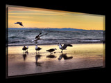 The Ballet of The Gulls by LynEve, Photography->Shorelines gallery