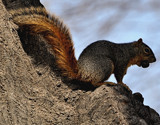 Made in the Shade by SR21, photography->animals gallery