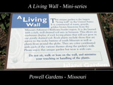 A Living Wall - Mini-series by Hottrockin, Photography->General gallery