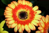 Bright & Beautiful by LynEve, photography->flowers gallery