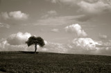 Solitary Summer by rriesop, Photography->Landscape gallery