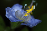 Blue & Yellow Flower by ryzst, photography->flowers gallery