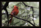 Grape Vine by photog024, Photography->Birds gallery