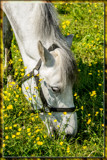 I Love Their Fragrance by corngrowth, photography->animals gallery