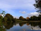 Pond life by gonedigital, Photography->Landscape gallery