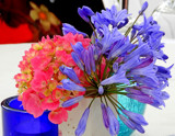 Table Decoration by braces, photography->flowers gallery
