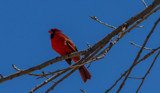 Mating Season by Pistos, photography->birds gallery