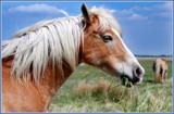 Image: Wild Horse
