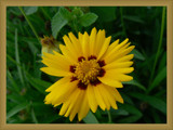 Yello-it's-me by muki7, Photography->Flowers gallery