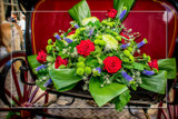 Gig Foofies 26 by corngrowth, photography->flowers gallery