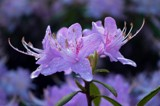 Spring rains bring blossoms by gr8fulted, photography->flowers gallery