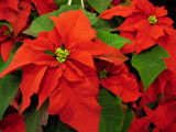 Christmas is coming by ekowalska, holidays->christmas gallery