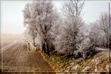 Hoar Frost By Frozen Mist by corngrowth, photography->landscape gallery