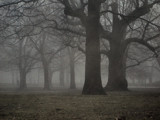 Fog on Land in Trees by Eventualyeti, Photography->Landscape gallery