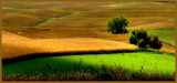 Golden Fields by Starglow, photography->landscape gallery