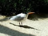 Dune Birdie by CSheridan10, photography->birds gallery
