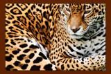 Jig Jag by wheedance, photography->animals gallery
