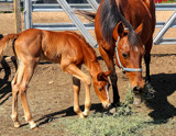 A Mare And Her Colt #2 by tigger3, Photography->Animals gallery