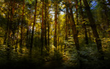 Pining Fir Here by casechaser, photography->manipulation gallery