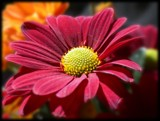 Red Velvet by jessiniki, Photography->Flowers gallery