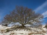 Snow Tree by Paul_Gerritsen, Photography->Landscape gallery