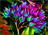Happy Flowers by LynEve, photography->manipulation gallery
